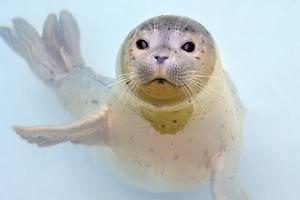 Garnett - An Adopt-A-Seal Poster Seal